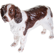 English Springer Spaniel, Liver & White